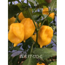 APS F7120C Pepper
