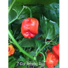 7-Pot Atlantic Red Pepper Seeds