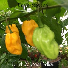 7-Pot Butch X Jonah Yellow Pepper Seeds