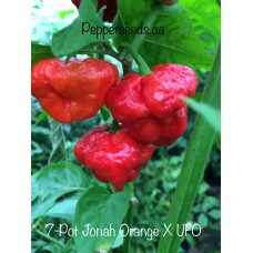 7-Pot Jonah Orange X UFO Pepper Seeds