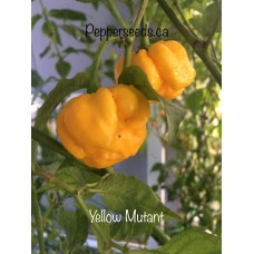 Yellow Mutant Pepper Seeds