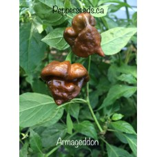7-Pot Armageddon Pepper Seeds