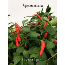 Rooster Spur