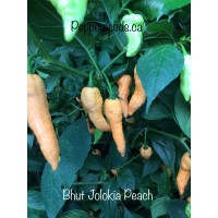 Bhut Jolokia Peach Pepper