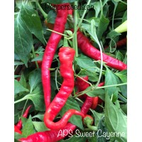 APS Cayenne Sweet Pepper