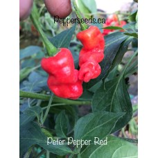 Peter Pepper Red