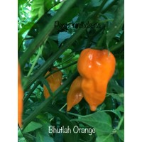 Bhutlah Orange Pepper