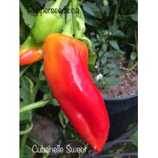 Cubanelle Sweet Pepper Seeds