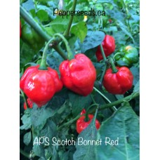 APS Scotch Bonnet Red Pepper