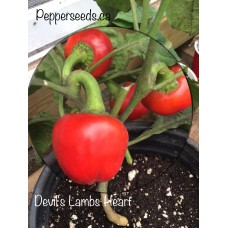 Devils Lamb Heart Pepper Seeds