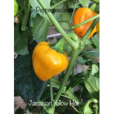 Jamacian Yellow Hot Pepper Seeds