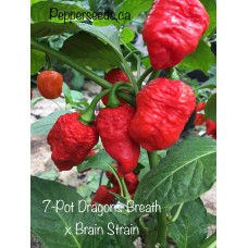 7-Pot Dragons Breath x Brain Strain Pepper Seeds