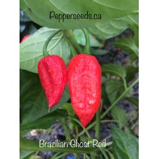 Brazilian Ghost Red Pepper Seeds