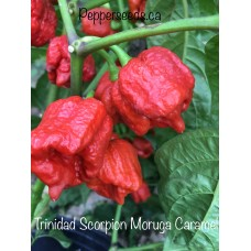 Trinidad Scorpion Moruga Caramel Pepper Seeds