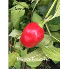Miniature Rocoto Red Pepper Seeds