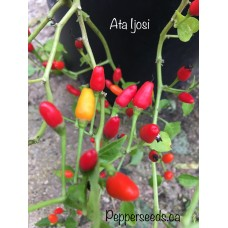 Ata Ijosi Pepper Seeds