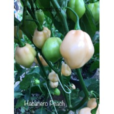 Habanero Peach Pepper Seeds