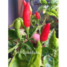 Hijo Puta Madre Pepper Seeds