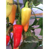 Numex Pinata Pepper Seeds