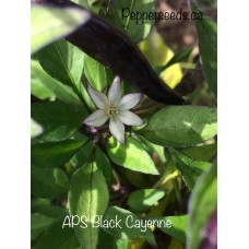 APS Black Cayenne Pepper Seeds