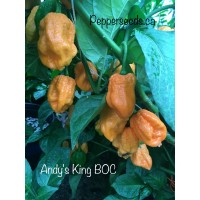 Andy's King BOC Pepper Seeds
