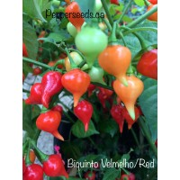 Biquinto Velmelho/Red Pepper Seeds