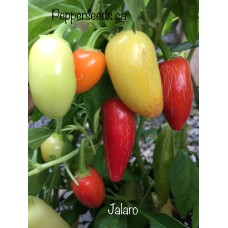 Jalaro Pepper Seeds
