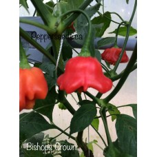 Bishops Crown Pepper Seeds