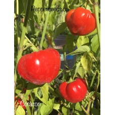 Corazon Pepper Seeds
