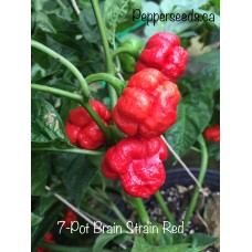 7-Pot Brain Strain Red Pepper Seeds