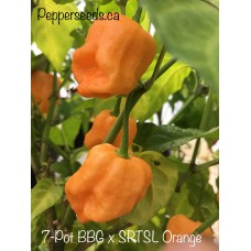 7-Pot Bubble Gum x SRTSL Orange Pepper Seeds