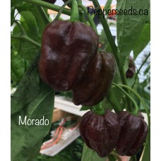 Morado Pepper Seeds