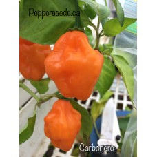 Carbonero Pepper Seeds