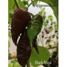 Black Naga Pepper Seeds