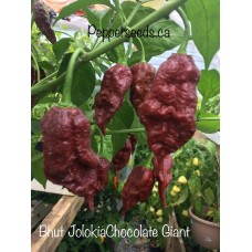 Bhut Jolokia Chocolate Giant Pepper Seeds