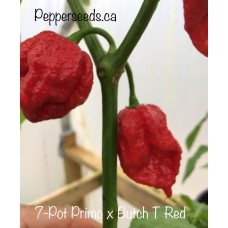 7-Pot Primo x Butch T Red Pepper Seeds