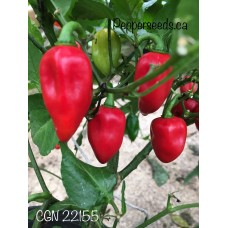 CGN 22155 Pepper Seeds
