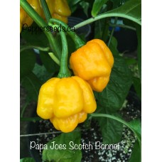 Papa Joes Scotch Bonnet Pepper Seeds