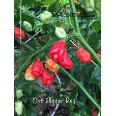 Datil Pepper Red Pepper Seeds