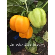 West indian Yellow Habanero Pepper Seeds