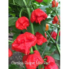 Carolina Reaper Mini Red Pepper Seeds