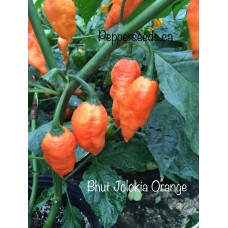 Bhut Jolokia Orange Strain Two Pepper Seeds