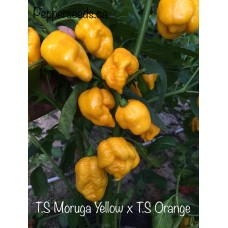 Trinidad Scorpion Moruga Yellow X Trinidad Scorpion Orange Pepper Seeds