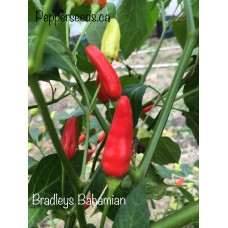 Bradleys Bahamian Pepper Seeds