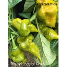 Trinidad Scorpion Green Pepper Seeds