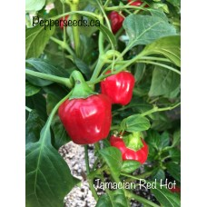 Jamacian Red Hot Pepper Seeds