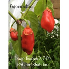 Tobago Treasure X 7-Pot BBG Red Strain Two Pepper Seeds