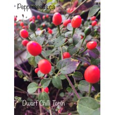 Dwarf Chilli Tepin Pepper Seeds