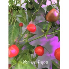 Weri Weri Pepper Seeds