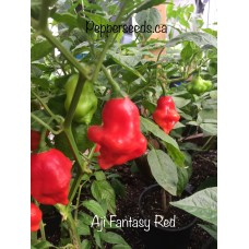 Aji Fantasy Red Pepper